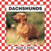Go to record Dachshunds